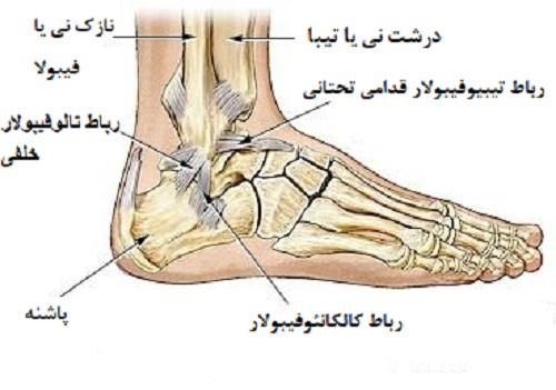 کدام رباطهای مچ پا به طور معمول رگ به رگ میشوند؟