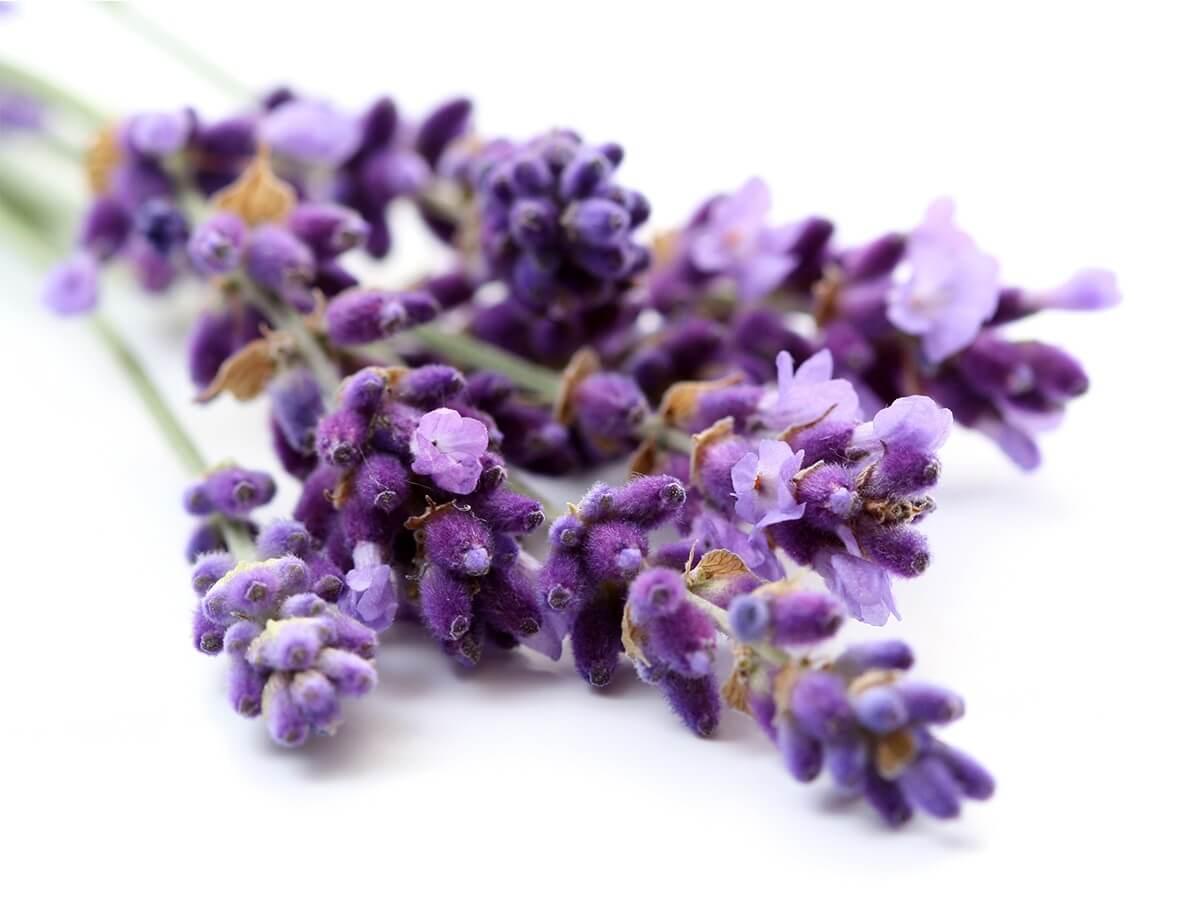 درمان گیاهی و سنتی